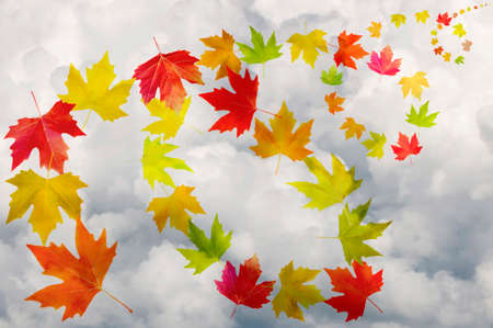 Fall Foliage - colorful leaves on cloudy sky background