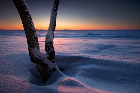 Tree in snow on the beach in early morning winter landscape photo