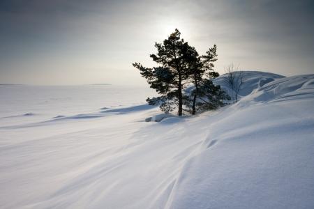 Winter afternoon landscape with lone tree Standard-Bild