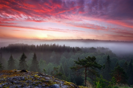 Early summer morning dawn in misty forest valley