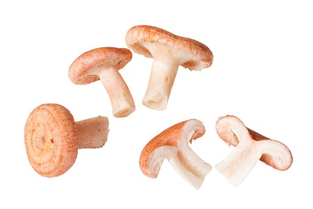 torminosus: Woolly milkcap mushrooms, isolated on white Stock Photo