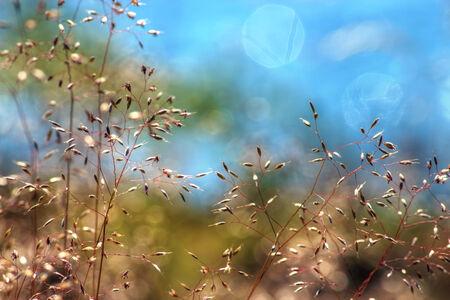 meadow  grass: Hierba de prado de cerca, dof bajo