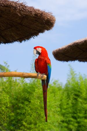 Exotic tropical parrot in the park Stock Photo