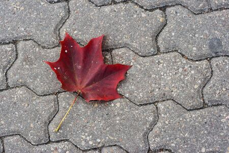 Red maple leaf on sidewalk