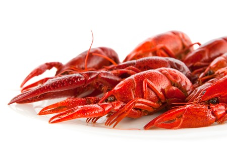 Red crawfish on a white dish photo
