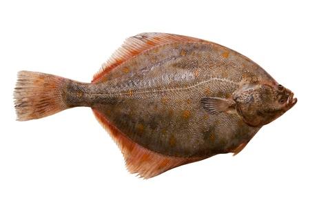 魚をヒラメします。白い背景で隔離 写真素材