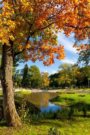 カドリオルグ公園タリンでカエデの木。エストニア 写真素材