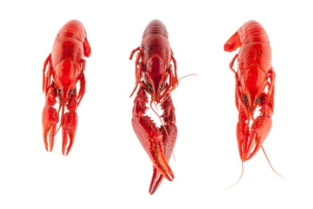 Three red crayfish on a white background photo