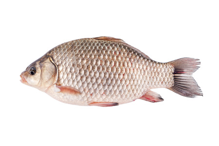 crucian: Crucian fish - isolated on a white background Stock Photo
