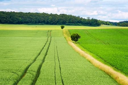 Field landscape in summer.