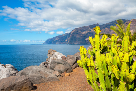 Cactus and Los Gigantes cliffs. Puerto de Santiago, Tenerife, Canary Islands, Spain (Background out of focus) photo