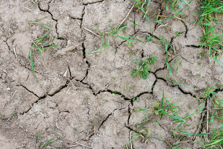 cracked earth: Dry cracked dirt ground with green plant Stock Photo