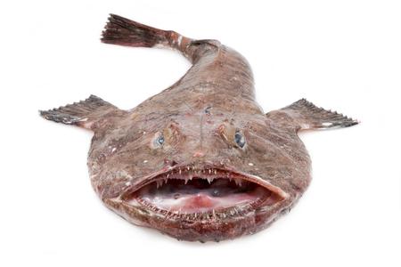 satan: Big Monkfish (Lophius piscatorius) auf einem weißen Hintergrund