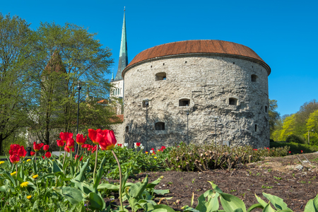 View of the Fat Margaret tower and st. Olavs Church. Tallinn, Estonia, EU Stock Photo
