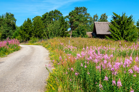 Country road through wildflowers. Estonia, Europe