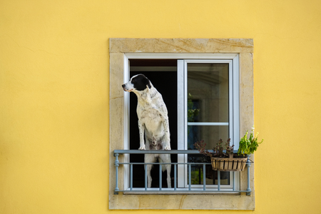 A man and dog standing in a window looking at the street. Tomar, Portugal Stock Photo