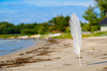 White seagull feather on the beach. Estonia