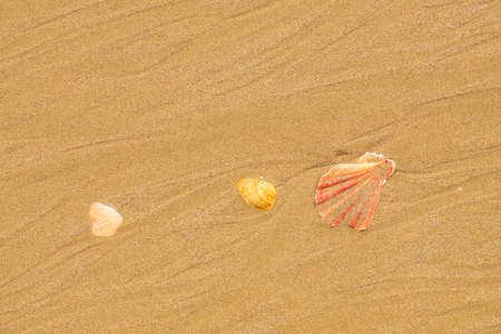 Seashells on a sandy beach in Albufeira. Algarve, Portugal Stock Photo