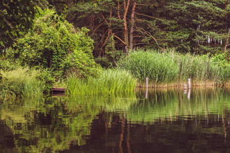 Green lake shore. Natural landscape with water. Forest and reeds reflecting in the water.
