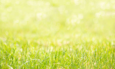 Spring background with grass in the foreground. Colorful natural background passing in blur.