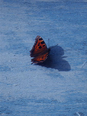 butterfly background: Blue background with butterfly Stock Photo