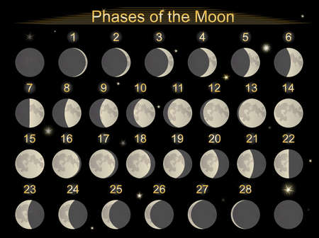 moon and stars: Vector illustration set icons  phases of the Moon