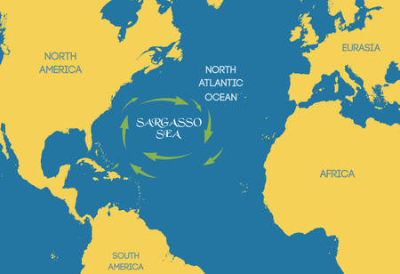 Vector illustration. The Sargasso sea on the world map.
