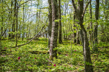 underbrush: Forest landscape. Meadow with flowers and trees. Selective focus. Stock Photo