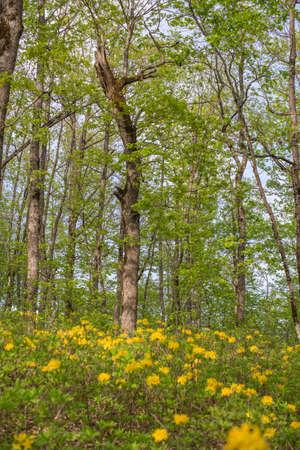 underbrush: Forest landscape. Oak grove. Selective focus. Stock Photo