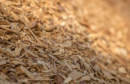 The Slope Of A Pile Of Industrial Wood Chips Selective Focus Stock