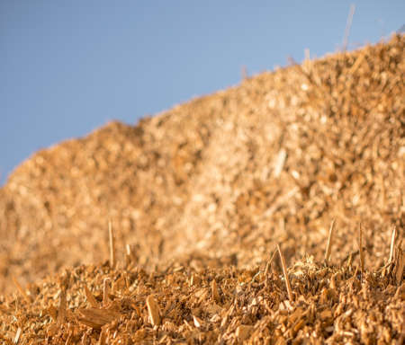 Sticks sticking out of a large pile of industrial wood chips. Selective focus. Stock Photo