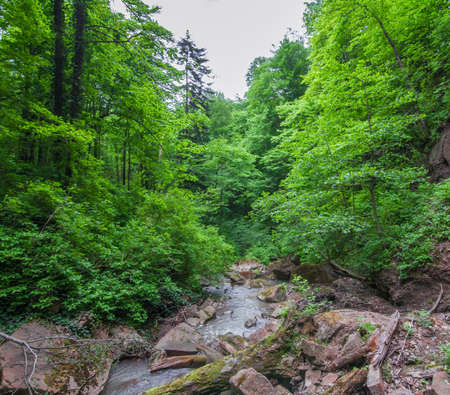 Forest landscape. Rocks and logs in the bed of a mountain stream. Selective focus. Stock Photo