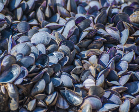 The texture of the shells of blue shellfish. Stock Photo
