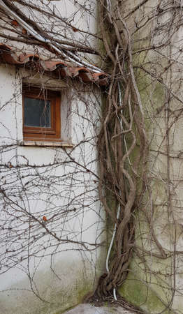 Dry roots of trees entangled the wall of the house.