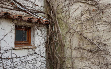 Thick, overgrown roots entangled the wall of the house.