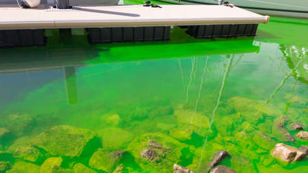 The water in the marina is polluted with green paint. Reklamní fotografie