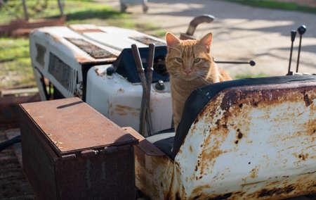 Red stray cat on a rusty abandoned bulldozer. 版權商用圖片