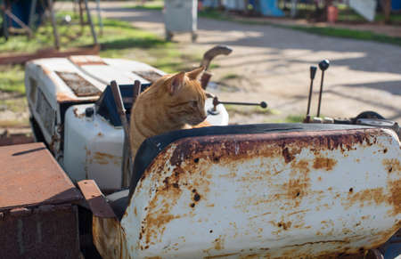Red stray cat on a rusty abandoned bulldozer. Foto de archivo