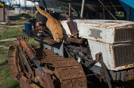 Red stray cat on a rusty abandoned bulldozer.