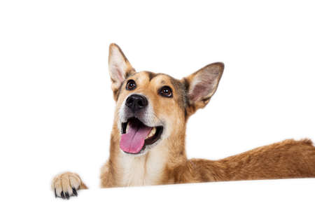 View at happy charismatic dog sitting, looking aside, isolated on white