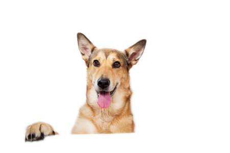 View at happy charismatic dog sitting, looking aside, isolated on white Stock fotó