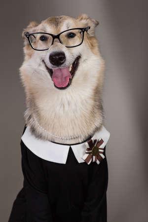 Portrait en studio d'un chien de taille moyenne portant une robe d'uniforme scolaire et des lunettes de soleil, regardant la caméra et assis, sur fond gris