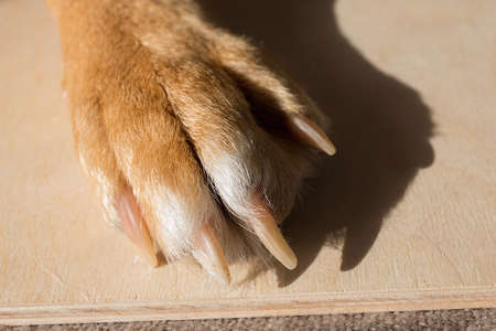 dog feet and legs wooden surface. Close up image of a paw of homeless dog. skin texture. Resting dog's paw close up.