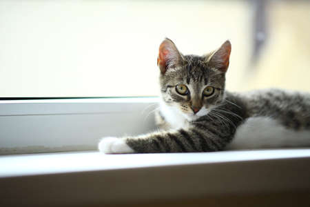 Lazy lovely gray cat lying by the window. Gray tabby cute kitten with beautiful eyes relaxing on window sill. Pets, pet care, good morning, sleep concept. Friend of human.