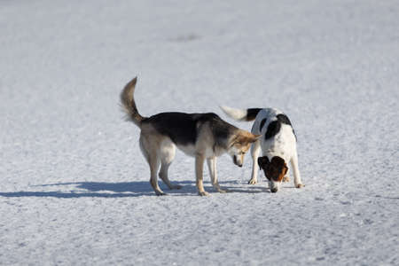 Two funny dogs playing together on winter snow field, outdoors.