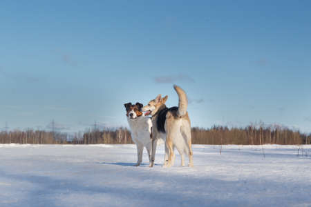 Two funny dogs running to each other on winter snow field, outdoors.