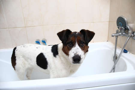Portrait of a cute dog taking a bath with his paws up on the rim of the tub