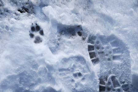 From above view at a footprint pet in the snow Reklamní fotografie