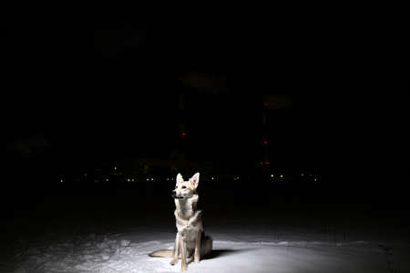 Portrait of a mixed breed horror dog in the field at night in winter