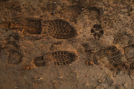 A lot of different men and dog footprint on a sandy surface in sunset